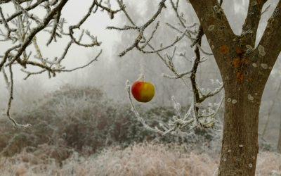 La ola de frío es el principal enemigo de los agricultores