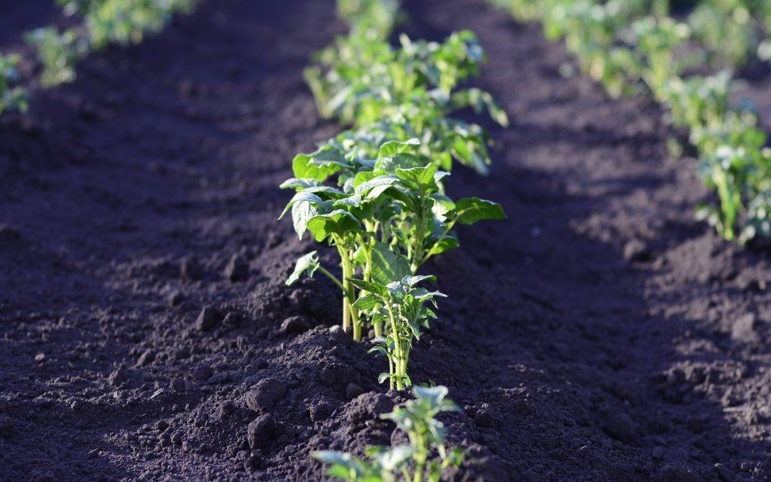 El efecto de la temperatura en los cultivos