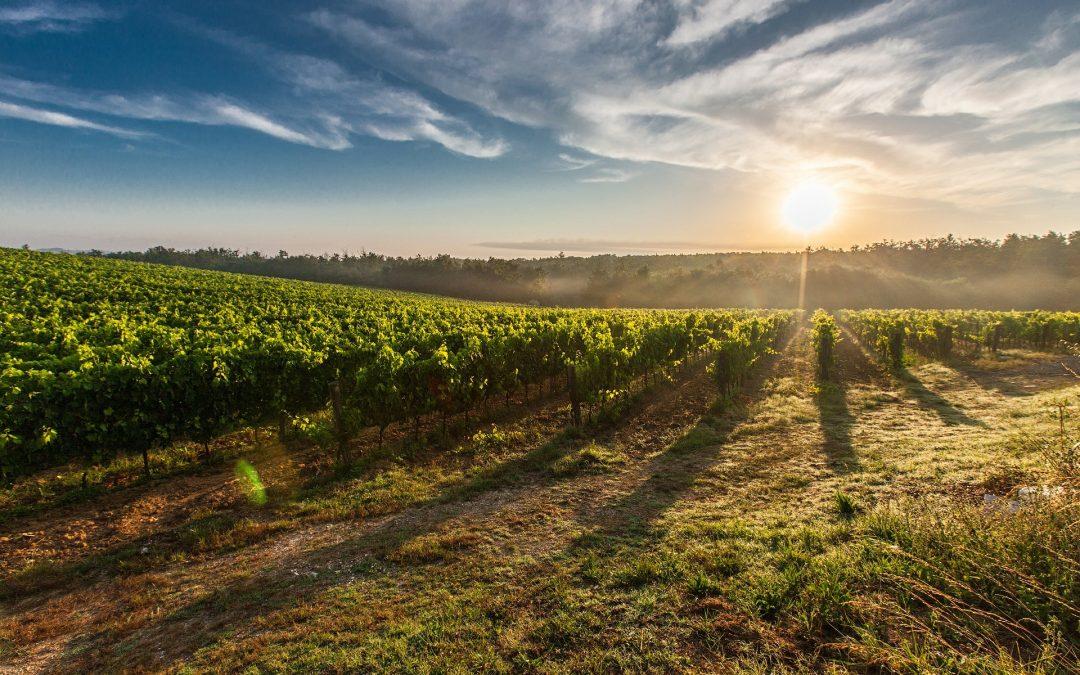 La radiación solar en los cultivos de campo abierto