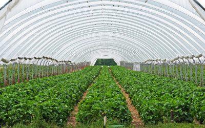 La importancia de monitorear cultivos en Invernadero y campo abierto