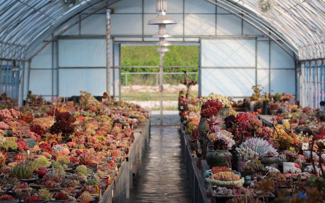 El CO2 es vital para el fortalecimiento y crecimiento de los cultivos