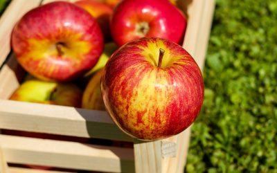 Agricultura de exportación: Importancia y cuidados