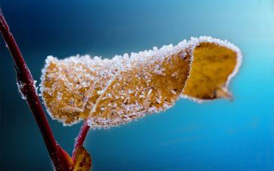 ¿Te gustaría conocer algunos tips para proteger tus cultivos este invierno?