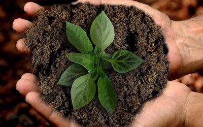 Cultivar de manera responsable es tarea de todos