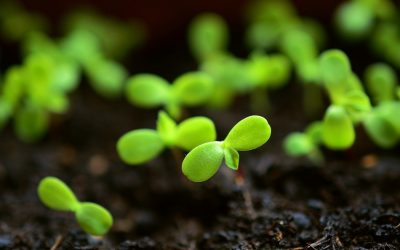 ¿Qué tipo de suelo es mejor para generar cultivos?