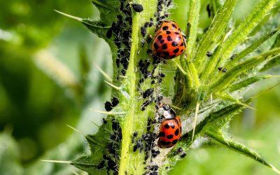 Previene las plagas en tus cultivos