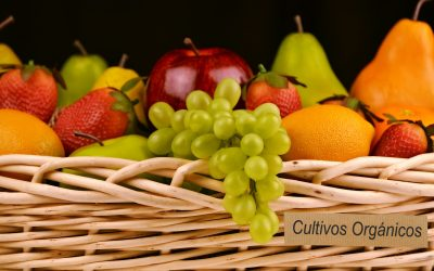 Los beneficios de las frutas y verduras orgánicas